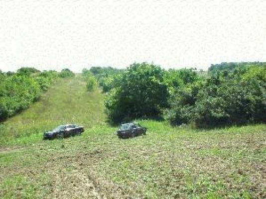 Ovocný sad + orná půda, celkem 3365-6242 m2 - k.ú. Starovičky (u Hustopečí)