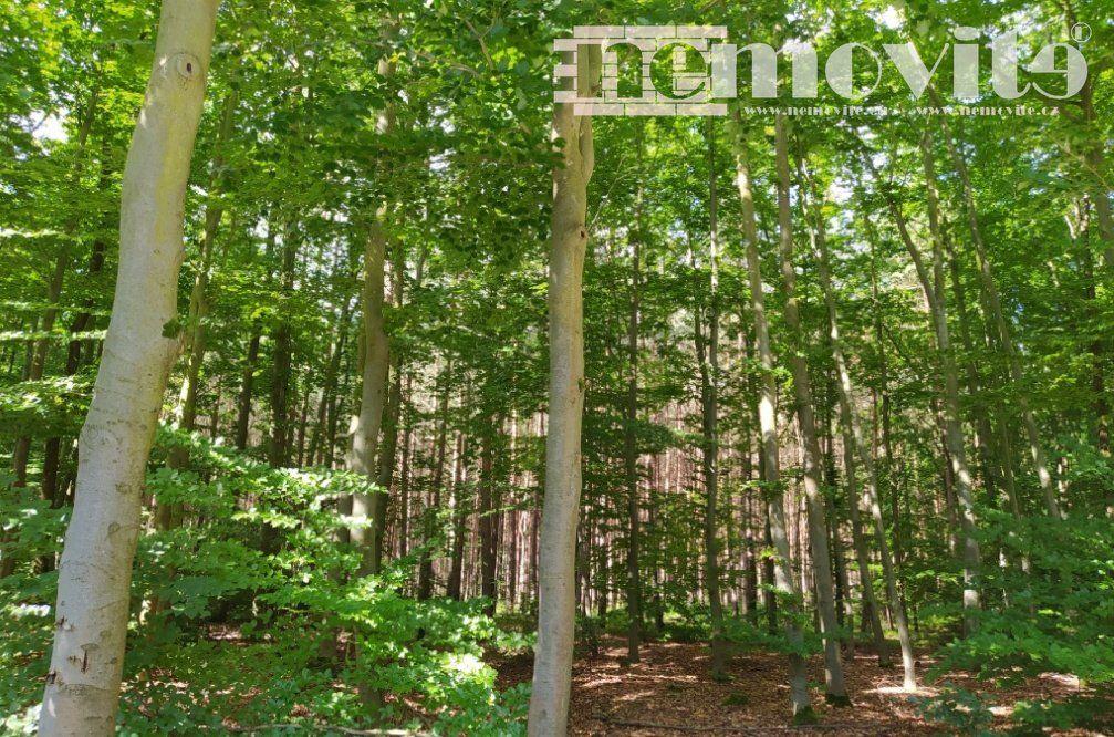 Prodej lesního pozemku