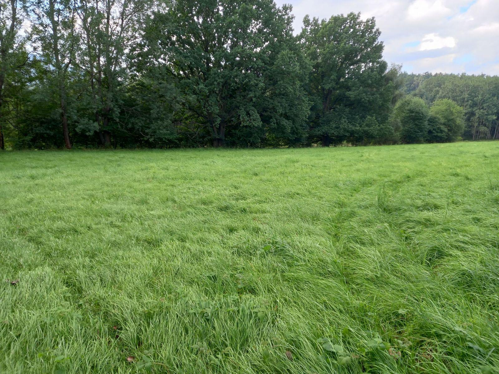 Prodej, Pozemky trvalý travní porost, 11437m2 - Cvikov II