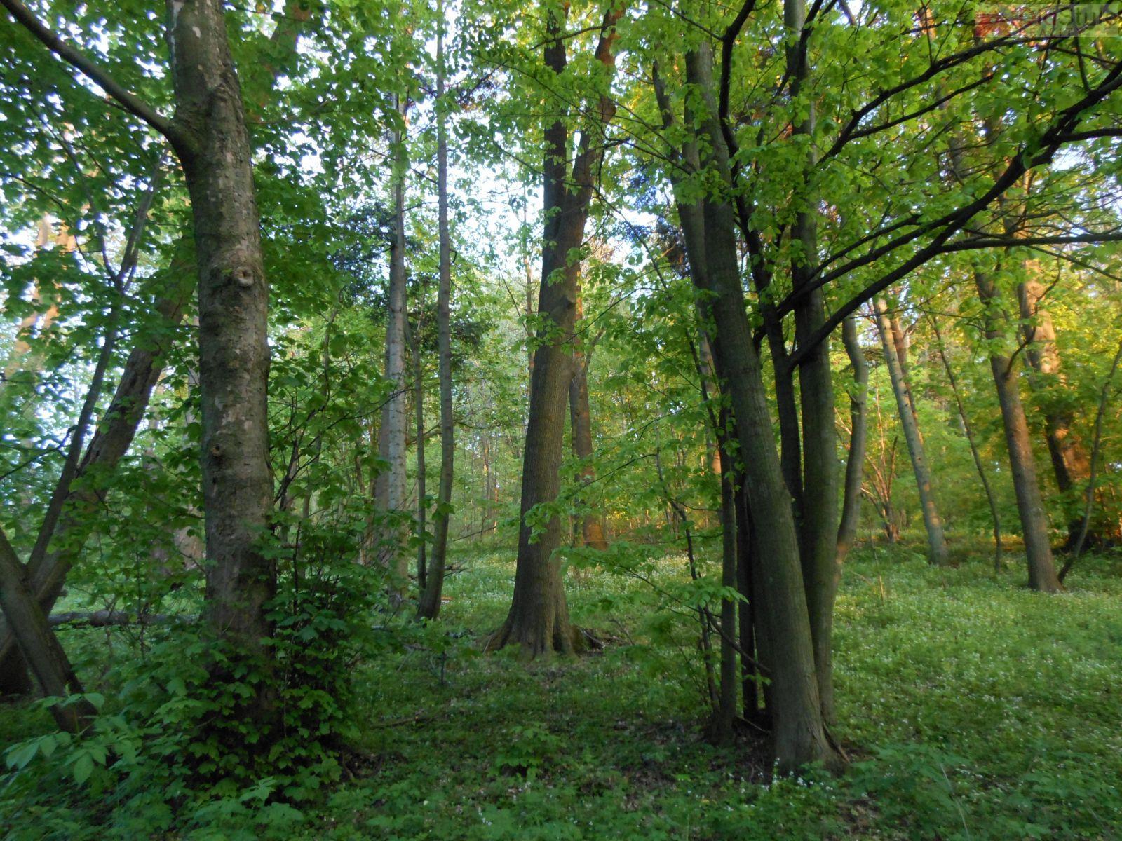 Prodej lesního a zemědělského pozemku v Kojetíně,  29 140 m2