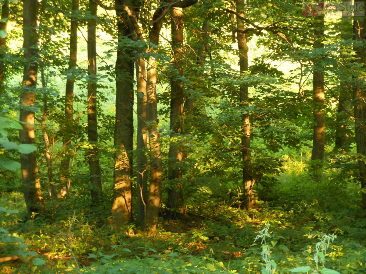 Prodej lesního pozemku v Kojetíně,  16 437 m2