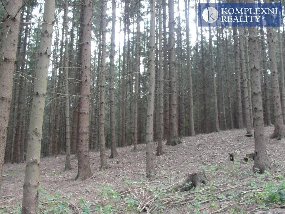 Prodej lesa Jamné u Tišnova