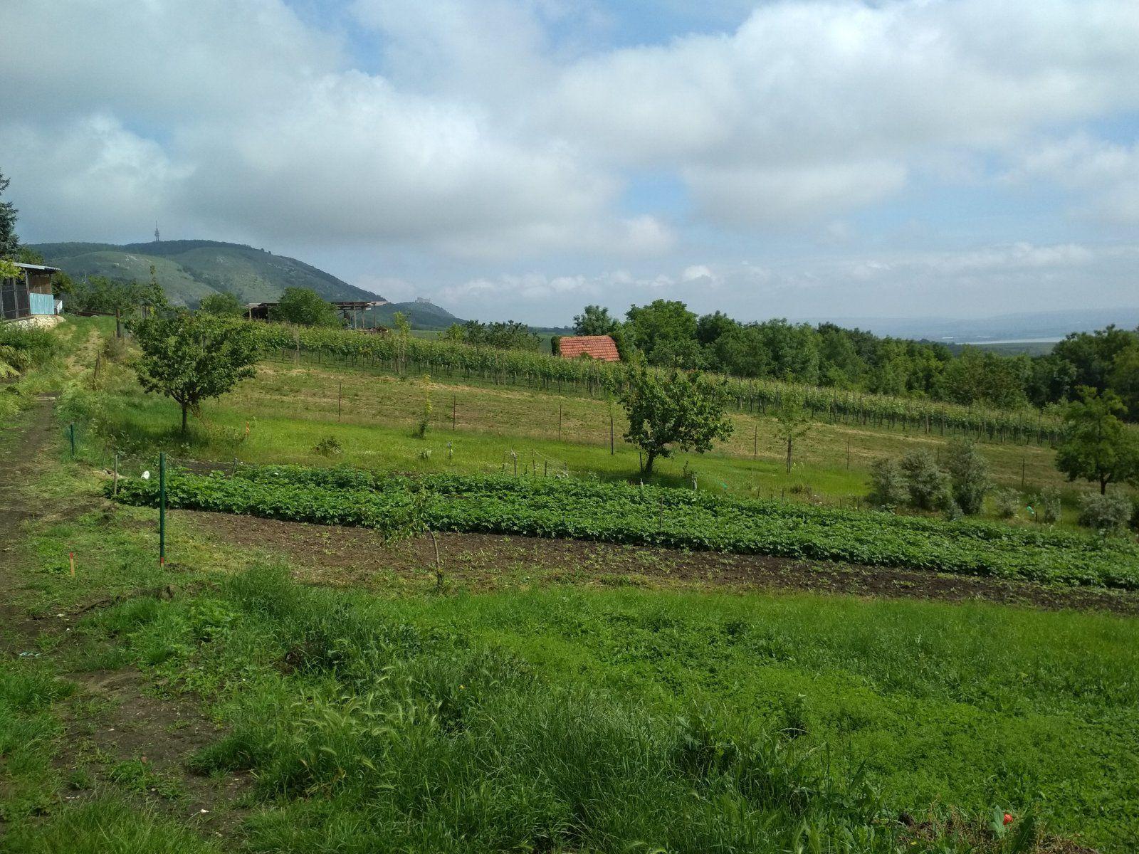 Stavební pozemek v turisticky vyhlášené obci Klentnice