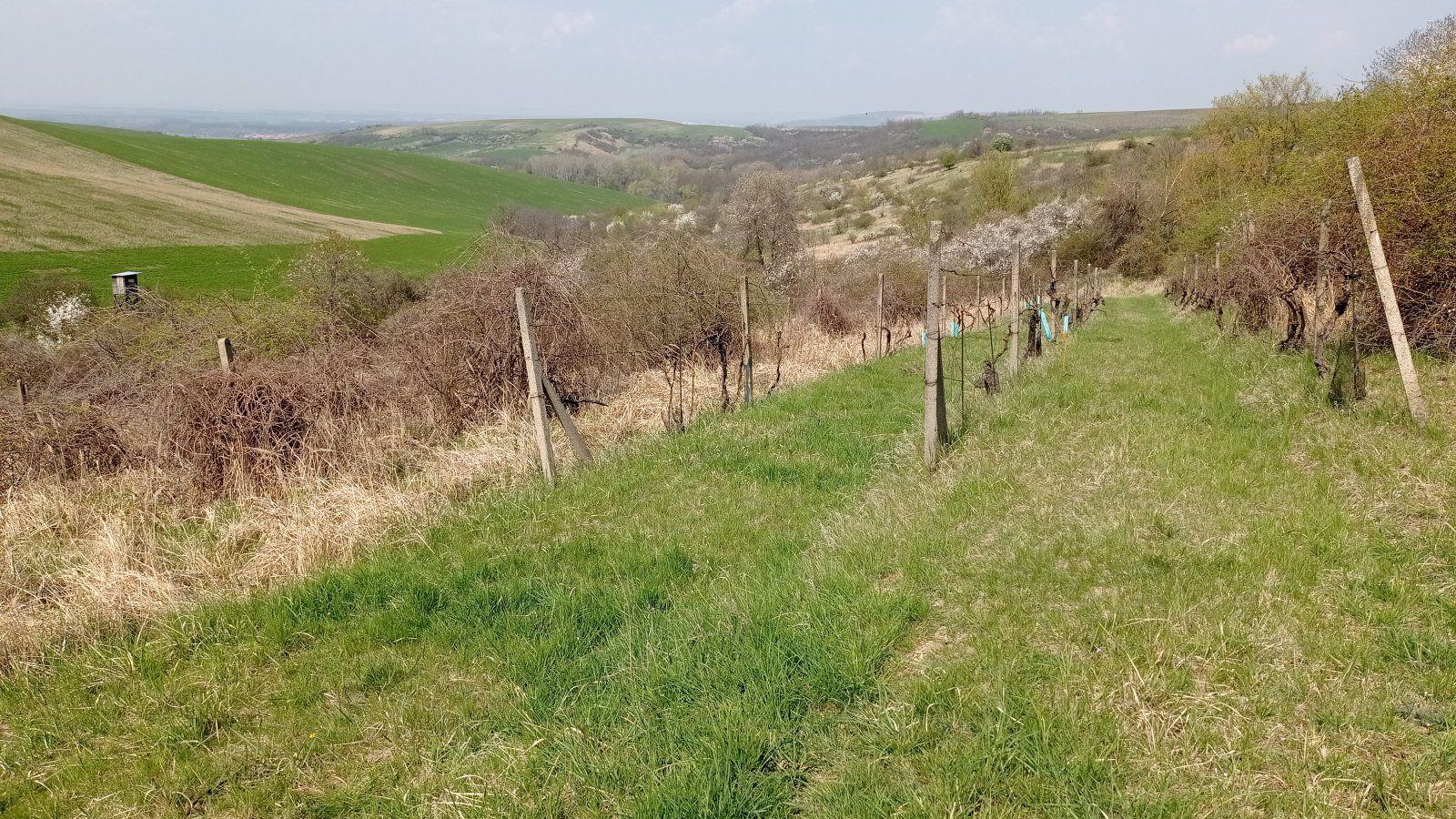 Prodej vinic v atraktivních lokalitách v obci Velké Němčice