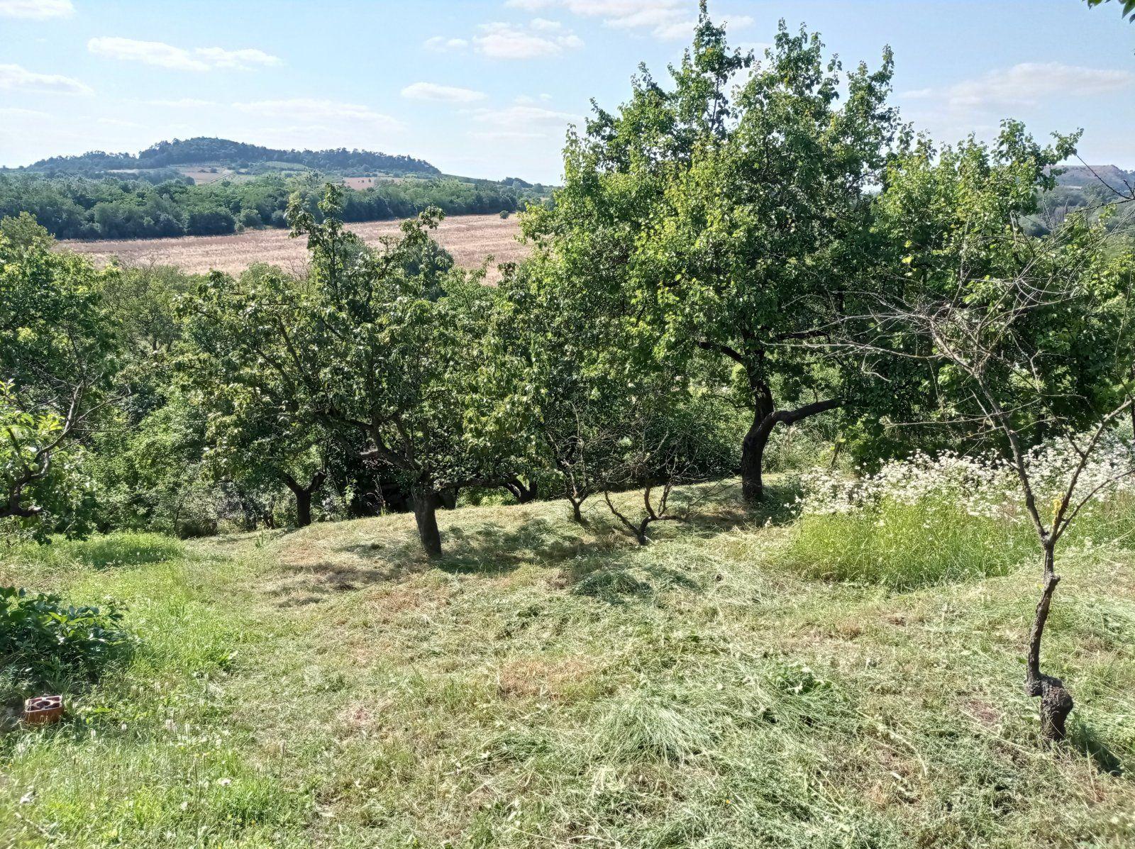 Zahrádka s chatkou a ovocnými stromy k rekreaci v Mikulově